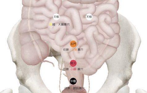 五要穴とは?原穴・郄穴・絡穴・兪穴・募穴をイメージで覚えよう!経絡経穴概論 試験対策
