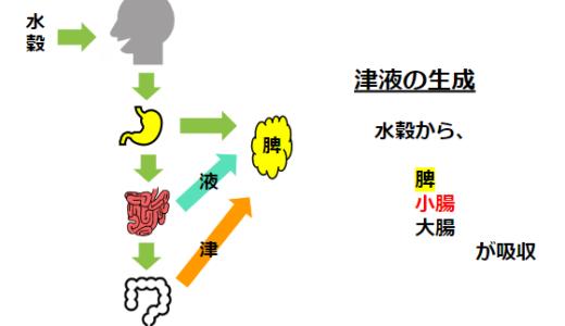 津液の生理と関わる臓器まとめ!東洋医学概論 試験対策