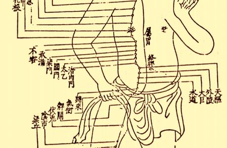 足の陽明胃経45穴の簡単な覚え方!語源イメージと語呂合わせで完璧!学生向け