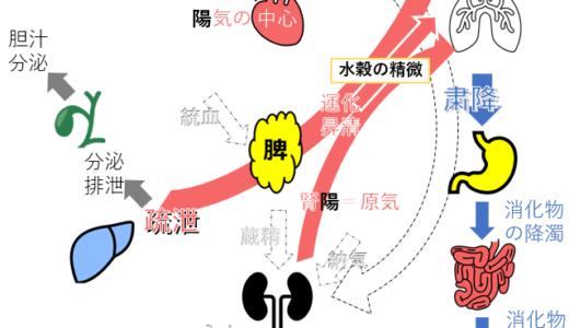 気機(昇・降・出・入)を図解で解説!五臓六腑の生理作用の方向が分かる!│東洋医学概論 試験対策