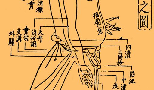 手の少陽三焦経23穴の簡単な覚え方!語源イメージと語呂合わせで完璧!学生向け