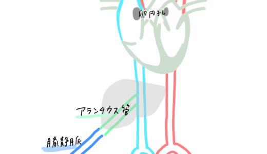 胎児循環(動脈管、静脈管、卵円孔)簡単覚え方!図でわかりやすくアニメ化理解!解剖学