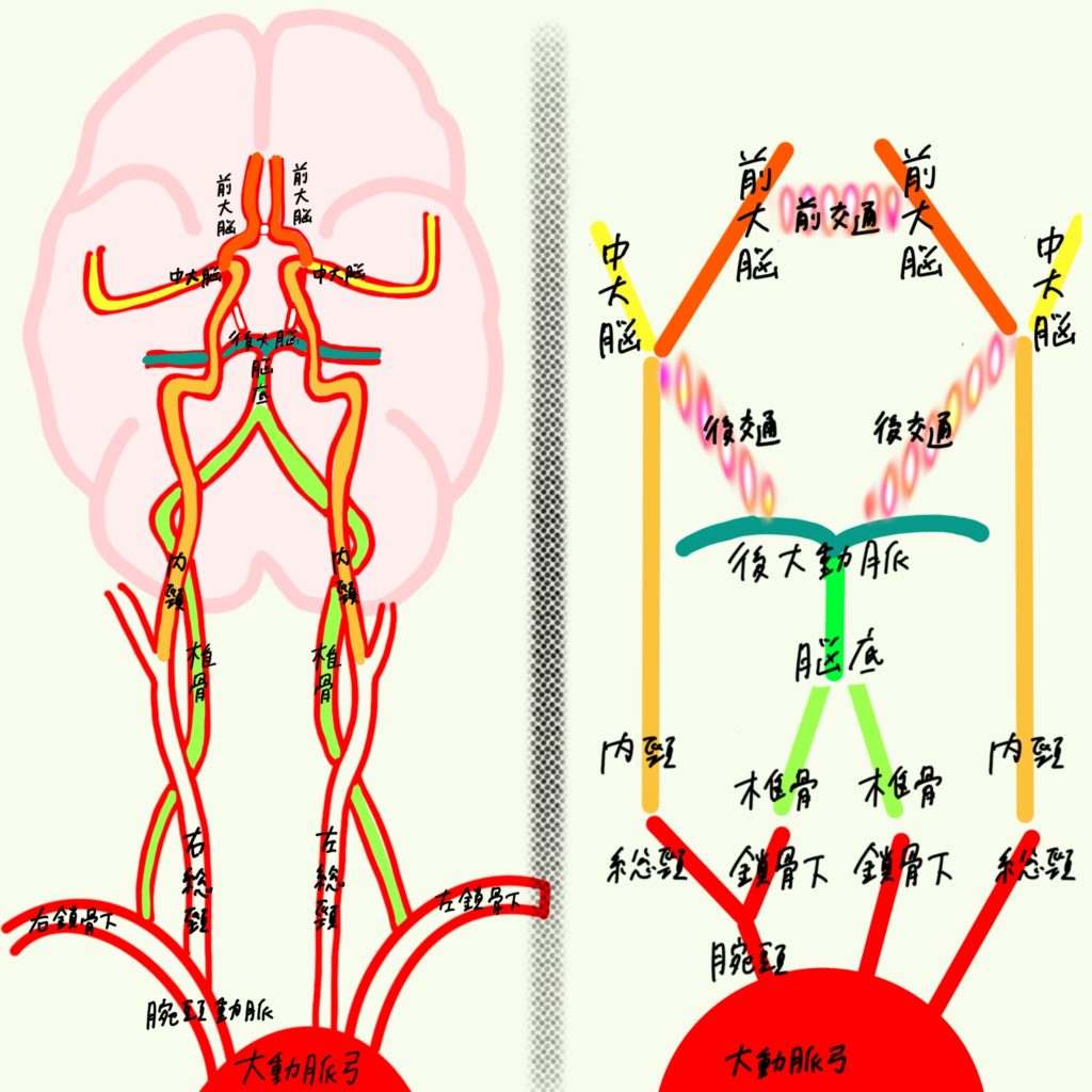 動脈 と は 輪 ウィリス