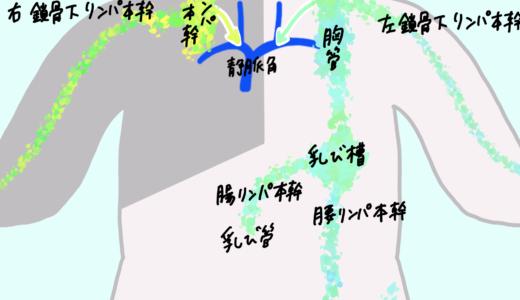 リンパ(リンパ節、脾臓、胸腺)カラフル図解!簡単覚え方!図でわかりやすくアニメ化理解!解剖学