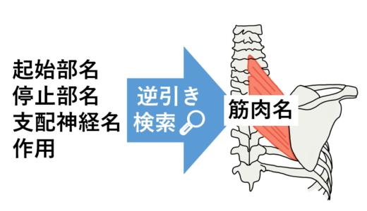 【筋肉一覧】起始停止、支配神経、作用から筋肉名を逆引き検索!解剖学
