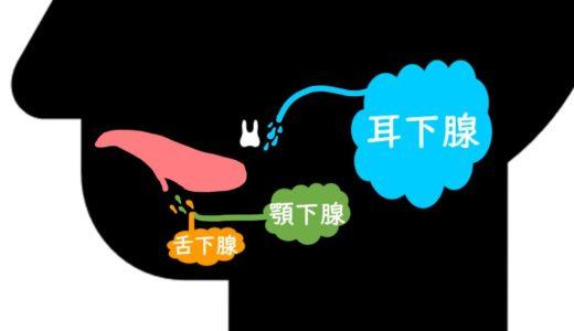 大唾液腺(耳下腺・舌下腺・顎下腺)の脳神経支配と特徴の覚え方!解剖学