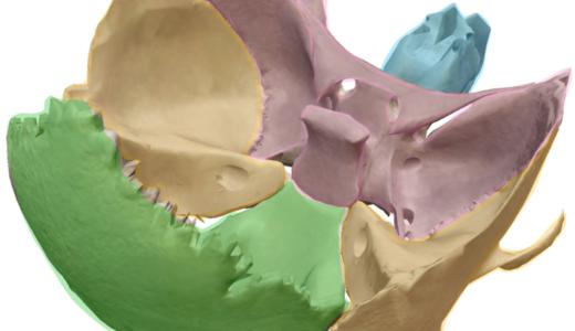 脳神経が通る頭蓋骨と孔の簡単覚え方!イラストで分かりやすく解説!解剖学